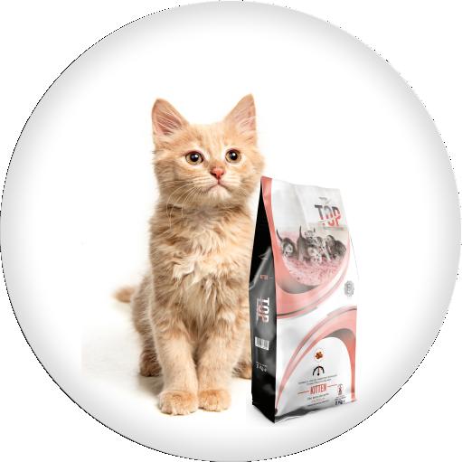 cibo secco gatto salmone top gatto